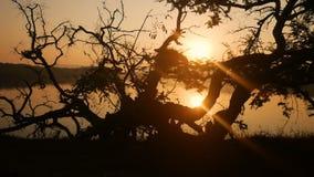 Fondo tropical del árbol con las siluetas de la palmera en la salida del sol almacen de metraje de vídeo