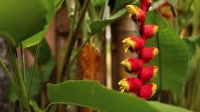 Fondo tropical del follaje en chalet de lujo Isla de Bali almacen de metraje de vídeo