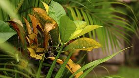 Fondo tropical del follaje en chalet de lujo Isla de Bali almacen de video