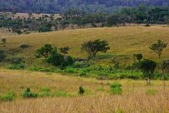 Fondo tropical del paisaje de la selva tropical fotos de archivo