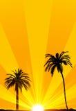 Fondo tropical del verano Imagen de archivo libre de regalías