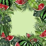 Fondo tropical del verano con las plantas de la sandía y de la selva Fotografía de archivo