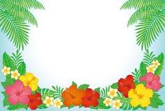 Fondo tropical del centro turístico Foto de archivo libre de regalías