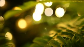 Fondo tropical macro con follaje fresco jugoso de la primavera del helecho joven verde metrajes