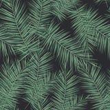 Fondo tropical oscuro con las plantas de la selva Modelo tropical del vector inconsútil con las hojas de palma verdes stock de ilustración