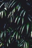 Fondo tropical verde oscuro rico de la textura de la hoja, concepto del fondo del balneario imagen de archivo
