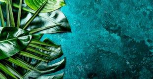 Fondo tropicale creativo delle foglie Le foglie tropicali di Trandy su turchese slate il fondo - colore dell'anno 2018 top Immagine Stock Libera da Diritti