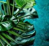 Fondo tropicale creativo delle foglie Le foglie tropicali di Trandy su turchese slate il fondo - colore dell'anno 2018 top Fotografia Stock