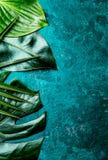 Fondo tropicale creativo delle foglie Le foglie tropicali di Trandy su turchese slate il fondo - colore dell'anno 2018 top Immagini Stock Libere da Diritti