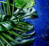 Fondo tropicale creativo delle foglie Foglie tropicali di Trandy sul fondo blu dell'ardesia - colore dell'anno 2018 Vista superio Fotografia Stock