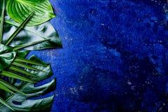 Fondo tropicale creativo delle foglie Foglie tropicali di Trandy sul fondo blu dell'ardesia - colore dell'anno 2018 Vista superio Fotografia Stock Libera da Diritti