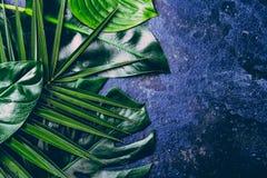 Fondo tropicale creativo delle foglie Foglie tropicali di Trandy sul fondo blu dell'ardesia - colore dell'anno 2018 Vista superio Fotografie Stock