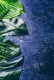 Fondo tropicale creativo delle foglie Foglie tropicali di Trandy sul fondo blu dell'ardesia - colore dell'anno 2018 Vista superio Immagini Stock