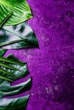Fondo tropicale creativo delle foglie Foglie tropicali di Trandy sul fondo ultravioletto dell'ardesia - colore dell'anno 2018 Fotografia Stock Libera da Diritti