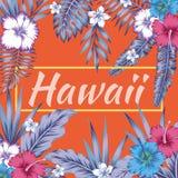 Fondo tropicale dell'arancia dell'ibisco delle foglie di slogan delle Hawai Immagine Stock