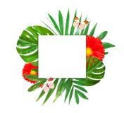 Fondo tropicale delle foglie e dei fiori della giungla Fotografia Stock Libera da Diritti