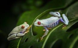 Fondo tropicale delle rane fotografia stock