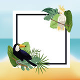 fondo tropicale di Palm Beach delle foglie del manifesto Fotografia Stock Libera da Diritti