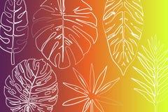 Fondo tropicale di paradiso di estate Isola mediterranea contenuta fotographia Corsica illustrazione di stock