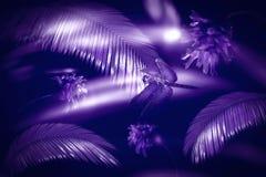Fondo ultravioletto dagli ingredienti naturali Foglie, fiori e libellula della felce Un colore alla moda di 2018 immagine stock