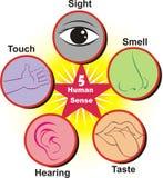 Fondo umano del manifesto di senso cinque Un illustation disegnato a mano di cinque sensi illustrazione di stock