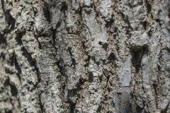 Fondo una corteza de un árbol viejo Fotografía de archivo libre de regalías