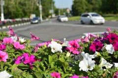 Fondo urbano con las flores y el camino Imágenes de archivo libres de regalías