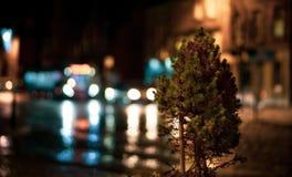 Fondo vago con il piccolo albero in priorità alta fotografia stock