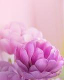 Fondo vago dei fiori Immagine Stock