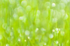 Fondo vago dell'erba verde con bokeh Immagine Stock