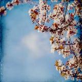 Fondo vago di springflowers fotografia stock libera da diritti