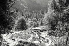 Fondo valle del parco nazionale di Yosemite Immagine Stock
