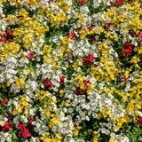 Fiori bianchi e gialli foto stock 3 040 fiori bianchi e for Nomi fiori bianchi e gialli