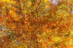 Fondo variopinto del fogliame di Autumn Leaves Sunny Fall Landscape Fotografie Stock Libere da Diritti
