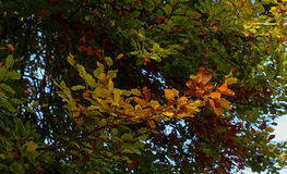 Fondo variopinto del fogliame di Autumn Leaves Sunny Fall Landscape Immagini Stock Libere da Diritti