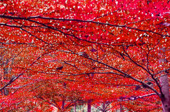 Fondo variopinto dell'estratto di beautifu della foresta Fotografia Stock Libera da Diritti
