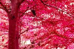 Fondo variopinto dell'estratto di beautifu della foresta fotografie stock libere da diritti
