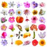Fondo variopinto della raccolta dei fiori Fotografia Stock Libera da Diritti