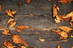 Fondo variopinto delle foglie - foglie di autunno Immagini Stock