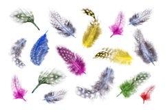 Fondo variopinto delle piume di uccello lanuginose molli tinte brillantemente colorate vive con i colori dell'arcobaleno sulla a Fotografie Stock Libere da Diritti