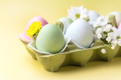 Fondo variopinto delle uova di Pasqua con i fiori gialli delle uova di Pasqua del fondo delle uova di Pasqua Immagini Stock