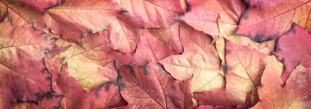 Fondo variopinto di struttura delle foglie di autunno dell'insegna di web Fotografia Stock