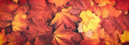 Fondo variopinto di struttura delle foglie di autunno dell'insegna di web Fotografie Stock