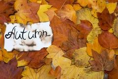 Fondo variopinto e luminoso delle foglie di autunno cadute l'iscrizione è l'autunno su pergamena Concetto di autunno Immagine Stock