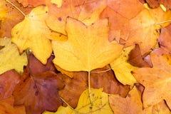 Fondo variopinto e luminoso fatto delle foglie di autunno cadute Concetto di autunno Fotografie Stock