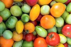 Fondo variopinto fresco dei pomodori Fotografia Stock