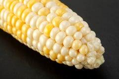 Fondo vegatable del primer del maíz Fotos de archivo libres de regalías