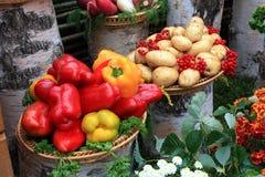 Fondo vegetal Foto de archivo libre de regalías