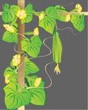 Fondo vegetal abstracto. Foto de archivo libre de regalías