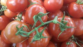 Fondo vegetal de los tomates rojos fotos de archivo libres de regalías